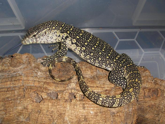 nile monitor care page